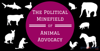 The Political Minefield of Animal Advocacy