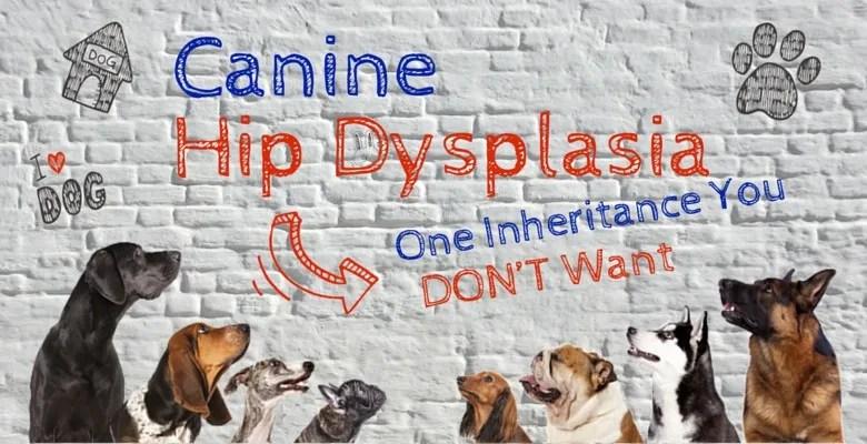 canine hip dysplasia feature image