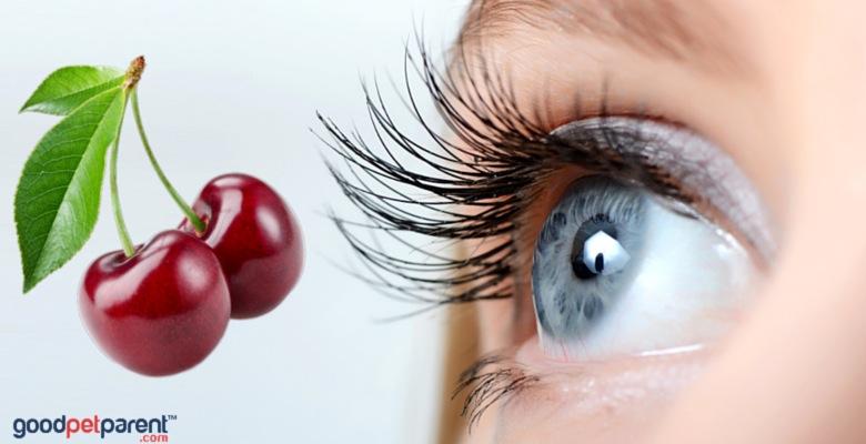 GoodPetParent feature image cherry eye