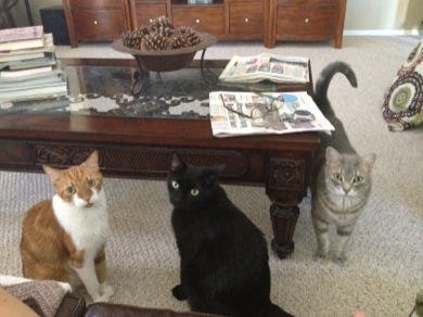 three cats together