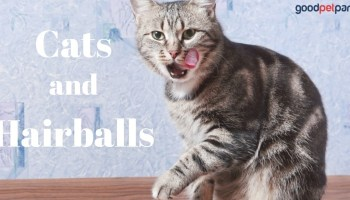 The 4 Most Common Causes of Vomiting in Cats - Good Pet Parent