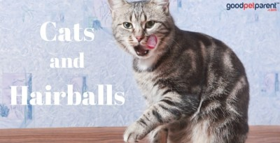 GoodPetParent.com feature image cats and hairballs