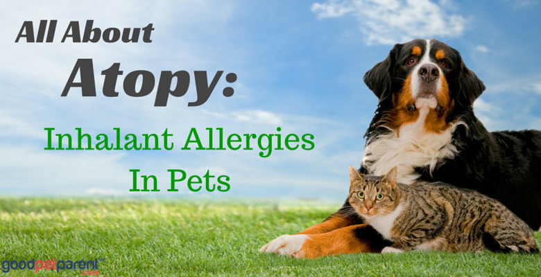 All About Atopy: Inhalant Allergies In Pets - Good Pet Parent