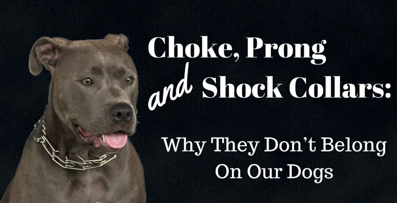 GoodPetParent Feature Image - Choke, Prong and Shock Collars