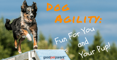 Dog Agility: Fun For You And Your Pup!