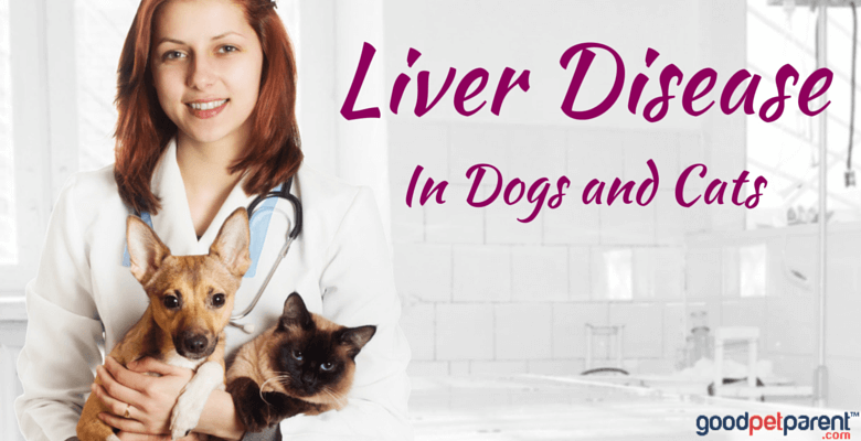 Liver Disease In Dogs And Cats Feature Image