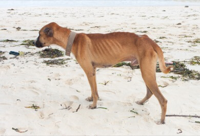 Weight loss in dogs with cancer