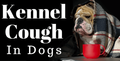 Kennel Cough Feature Image