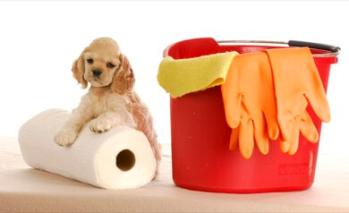 Puppy with cleaning supplies