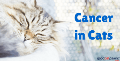 Cancer in Cats Feature Image