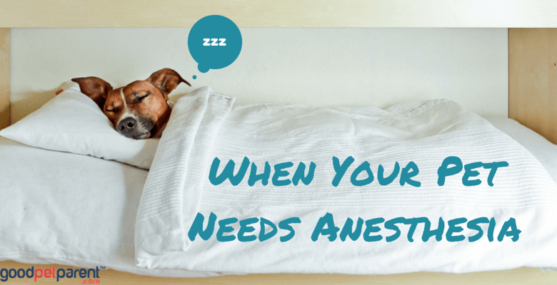 When Your Pet Needs Anesthesia Feature Image