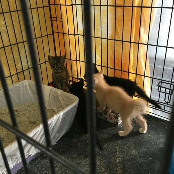 takes-village-rescue-kitten-3