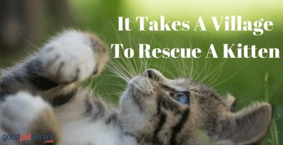 It Takes A Village To Rescue A Kitten