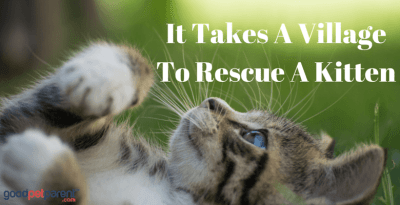 It Takes A Village To Rescue A Kitten