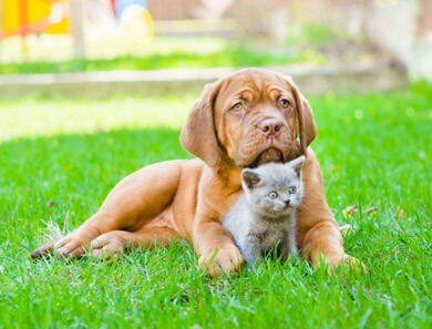 puppy and kitten immune systems