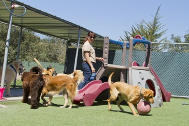 vaccination-doggie-daycare