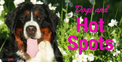 dogs and hot spots feature image