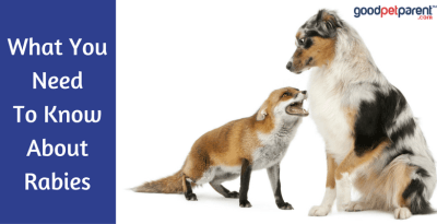 What you need to know about rabies feature image