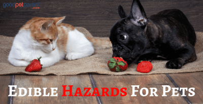 Edible Hazards For Pets