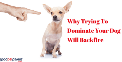 Why Trying To Dominate Your Dog Will Backfire Feature Image