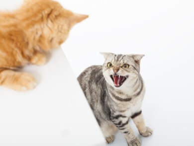Two Cats Squabbling
