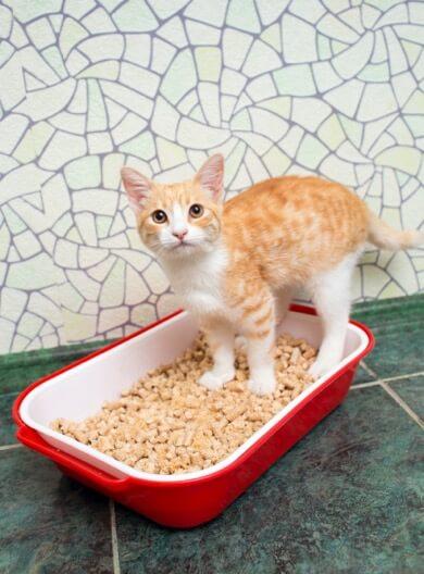 cat in low- or no-dust litter box reduce feline asthma