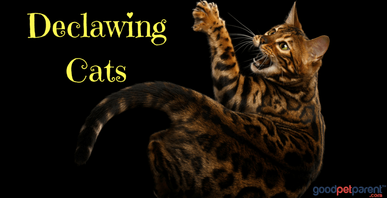 Declawing Cats Feature Image