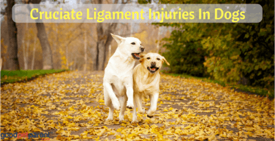 Cruciate Ligament Injuries In Dogs