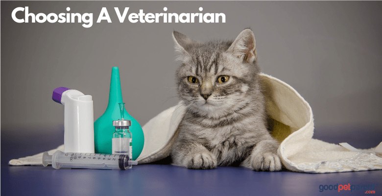 Choosing A Veterinarian: Finding The Perfect Vet For Your Pet Feature Image