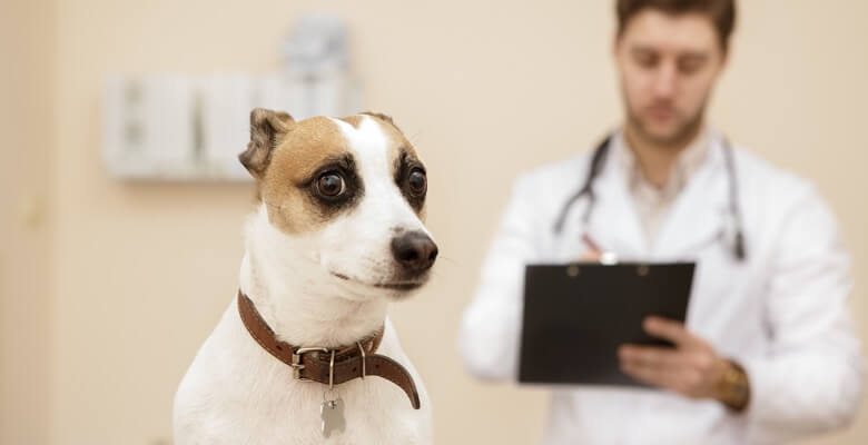 Nervous dog with vet in exam room