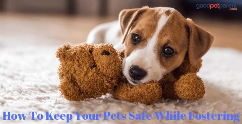 How To Keep Pets Safe While Fostering Feature Image