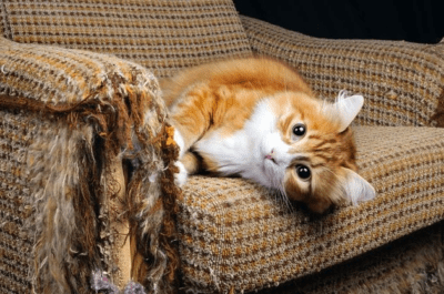 How to make a cat repellent to protect furniture
