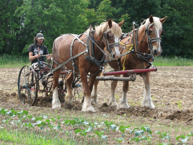 Devon Acres Organic Farm