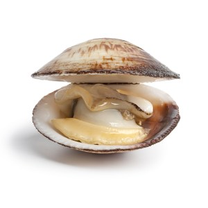 Clams Nutrition