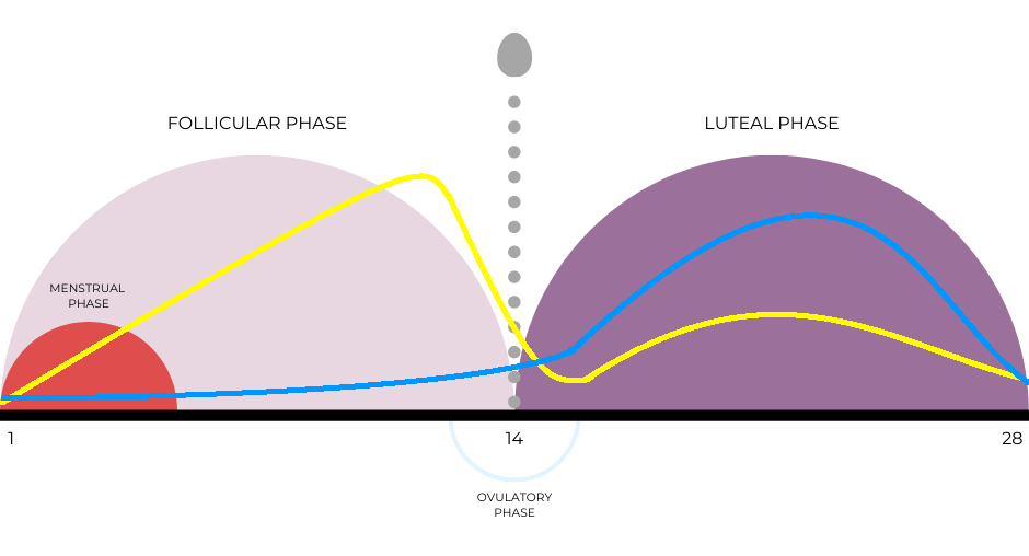 A chart showing a visual representation of the menstrual cycle phases.
