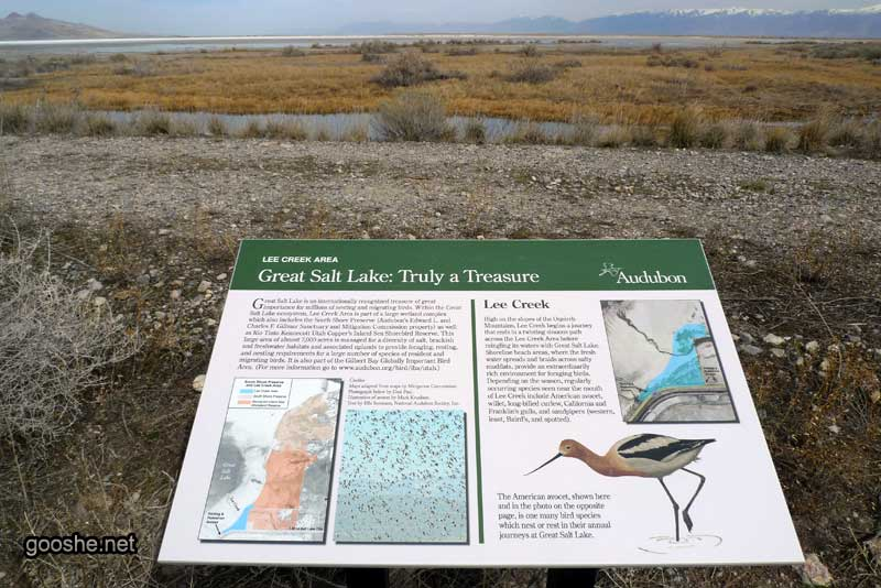 پرندگان دریاچه نمک