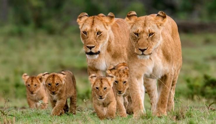 Game Watch Safari at Lake Nakuru National Kenya