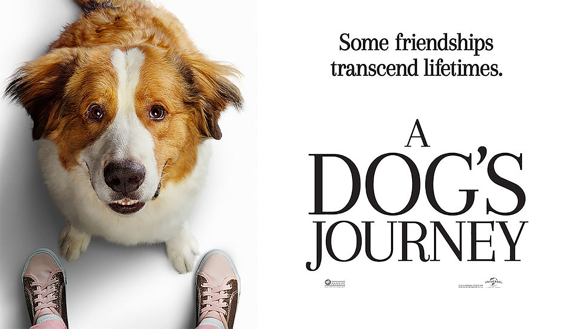 Dogs Journey (1)