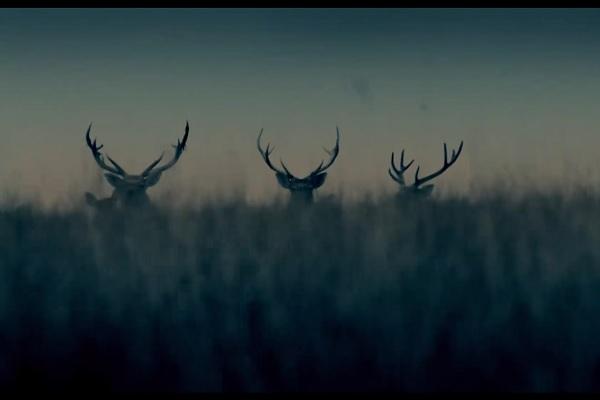 Куди заведе «Слід звіра»? Рецензія на екранізацію твору Ольги Токарчук