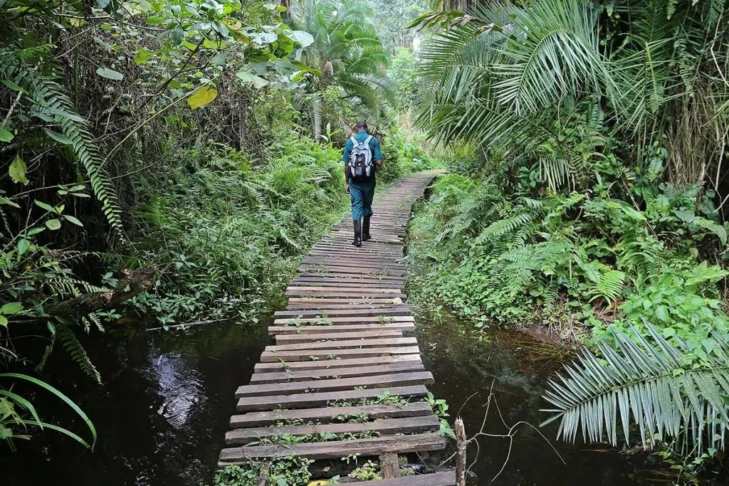 Kibale National Park   Destinations   Encounter Africa Safaris
