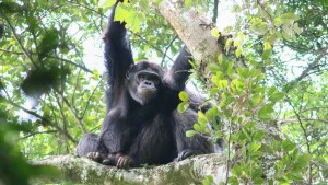 2 Day Nyungwe Chimpanzee tracking