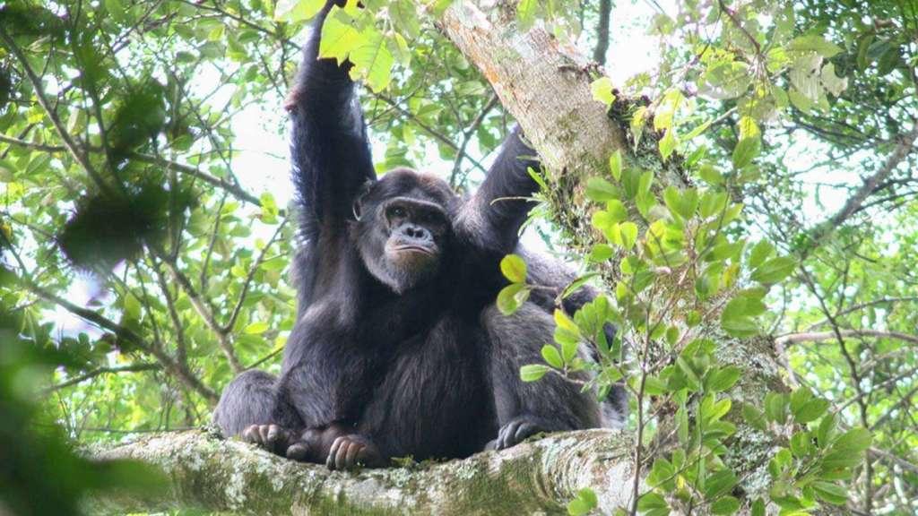 2 Day Nyungwe Chimpanzee tracking
