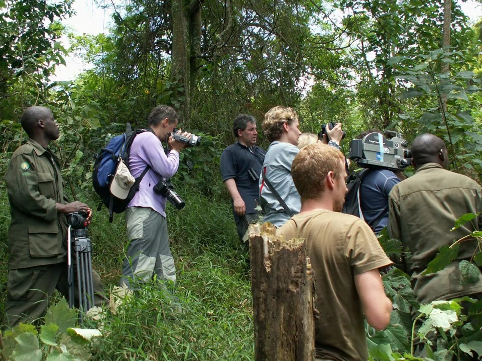 Benefits of Gorilla Tourism - Uganda Holiday Adventure