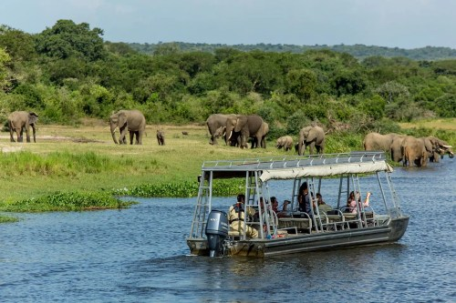 Uganda Safaris African safari wildlife holidays and gorilla trekking tours in Bwindi