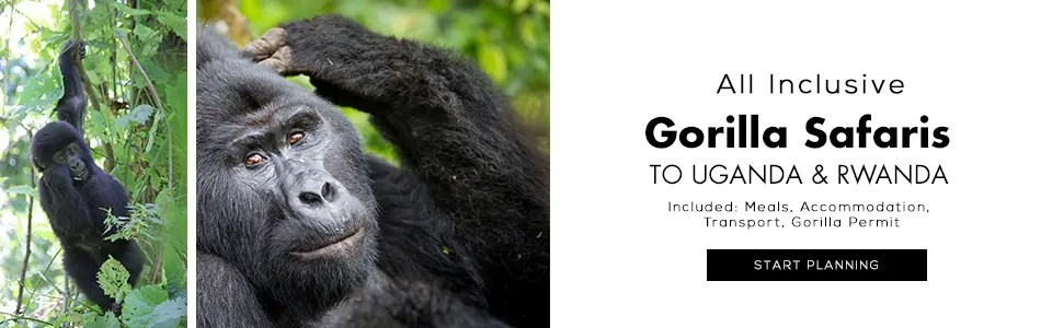 Gorilla Tours and Safaris in Uganda and Rwanda