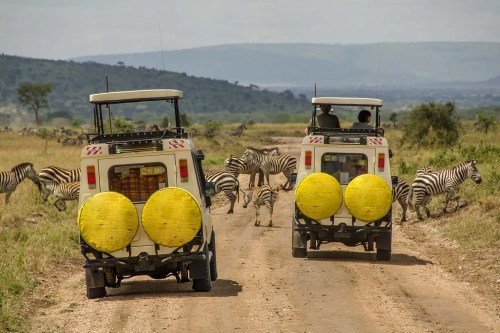Gorillas and Serengeti Migration Safari