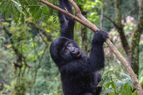 Gorillas, Nile Source & Mara Africa Adventure