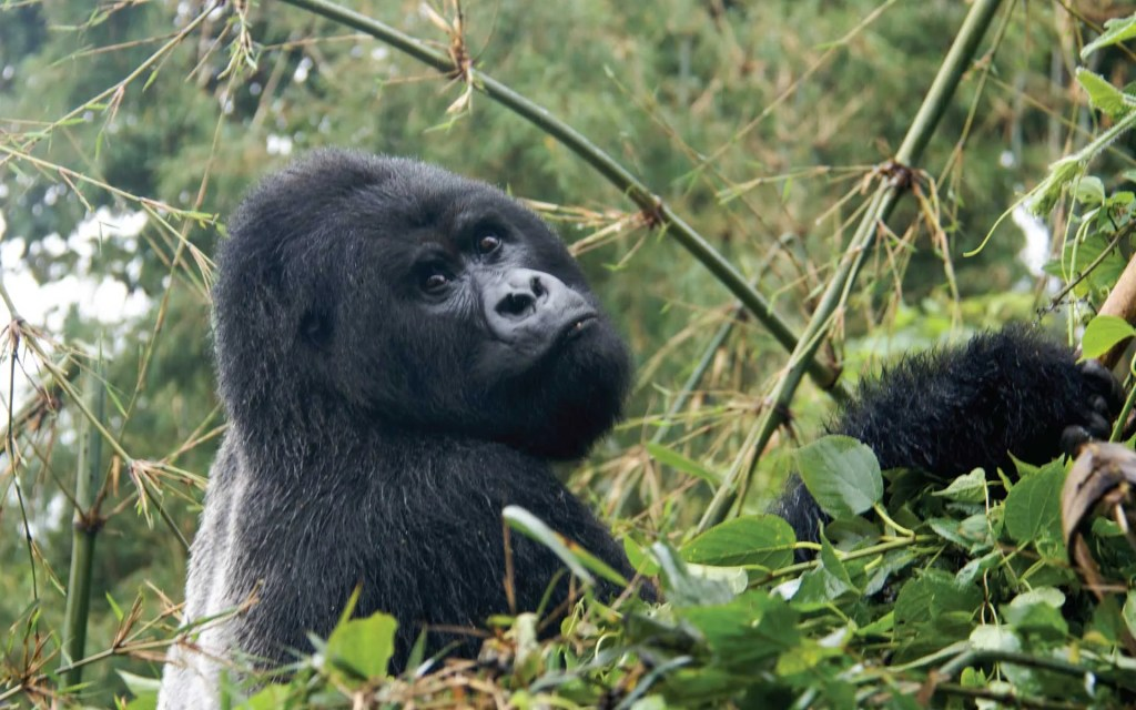 Rwanda Safari Excursion Tour