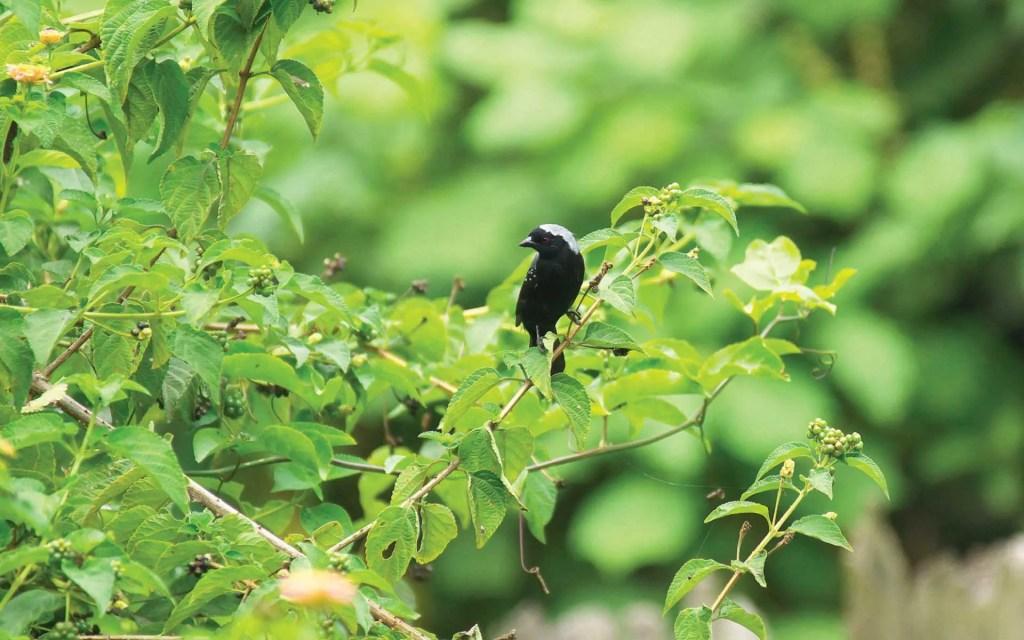 Bigodi Wetland Sanctuary Birding in Uganda