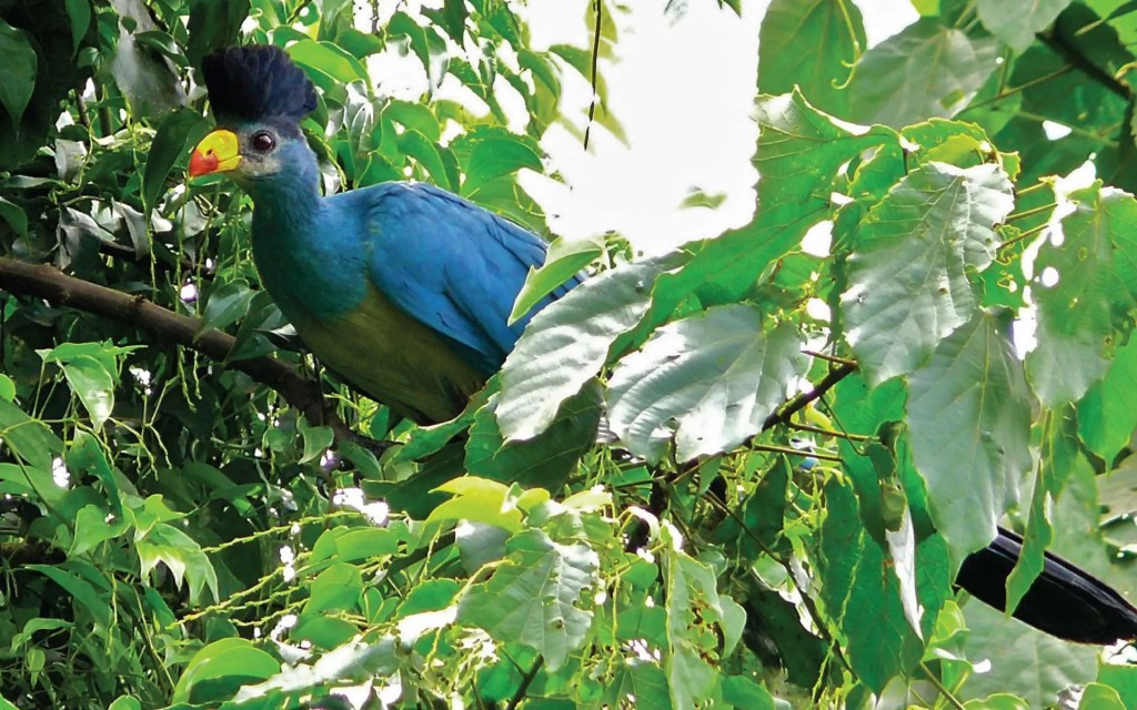 Bigodi Wetland Sanctuary birding in Bwindi Impenetrable National Park